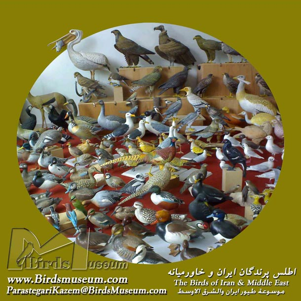 The Birds of Iran and Middle East